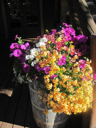 Grand Lake Lodge: Nice Flowers