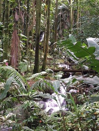 Hawaii Tropical Botanical Garden: photo4.jpg
