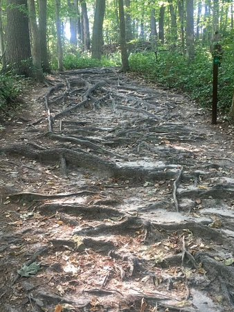 Nature's staircase - Picture of Cheesequake State Park