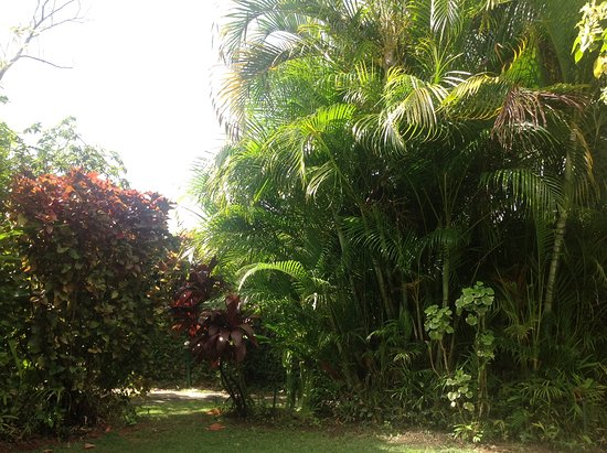 Kariwak Village Holistic Haven and Hotel: Garden view when relaxing on the veranda.