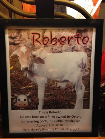 Harry's Burritos: Roberto, official mascot of Harry's