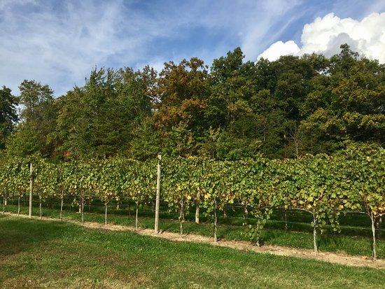 Afton, Virginie : the vineyard