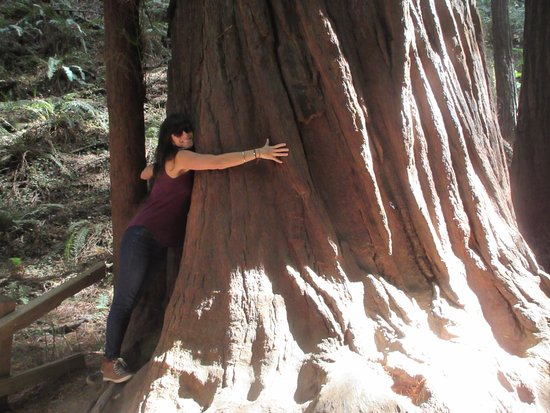 Mill Valley, CA: Redwood and my daughter