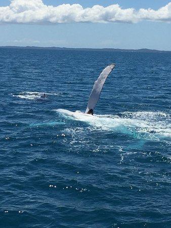 Hervey Bay, Australia: Spectacular Whale Watching