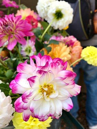 Floral Park, NY: photo0.jpg