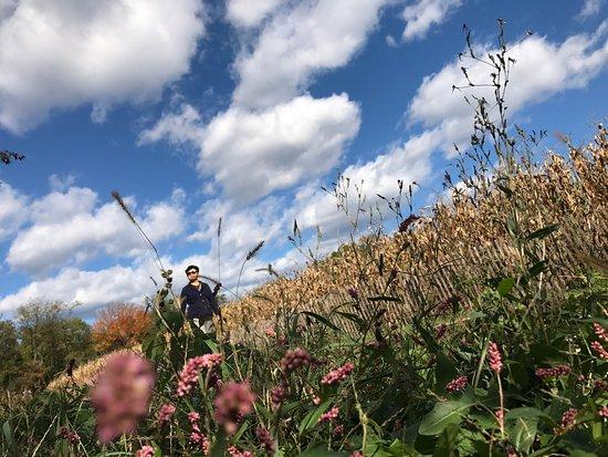 Floral Park, NY: photo1.jpg