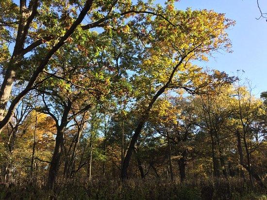 Wheaton, IL: photo3.jpg