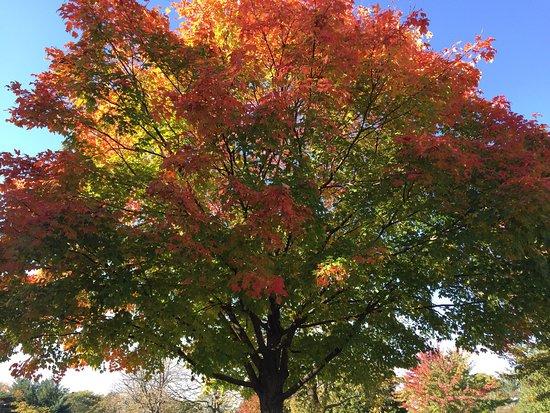 Wheaton, IL: photo4.jpg