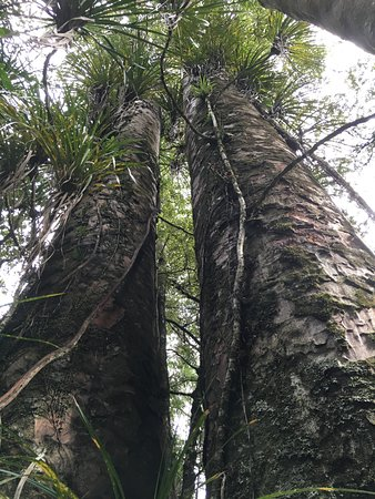 Kerikeri, Nueva Zelanda: Twin Trees