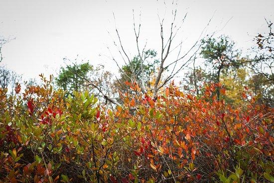 Layton, Nueva Jersey: Buttermilk falls