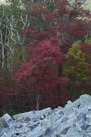 Middletown, Μέριλαντ: Rock hill to scarlet colors