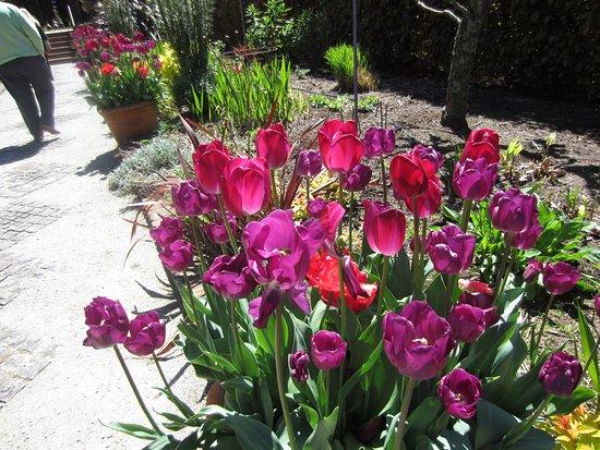 Olinda, ออสเตรเลีย: Beautiful tulips