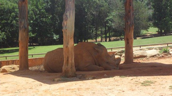 Mooresville, North Carolina: Rhinoceros