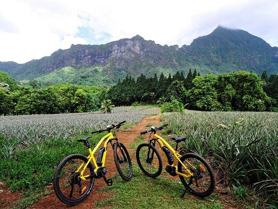 Lili Rent E-Bike