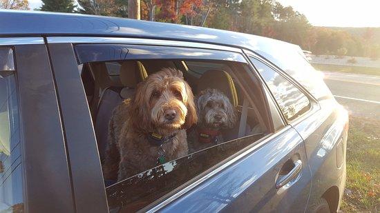 Granby, Κονέκτικατ: Doggies