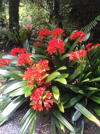 วานกาไร, นิวซีแลนด์: photo0.jpg