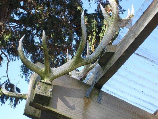 Invercargill, نيوزيلندا: antlers