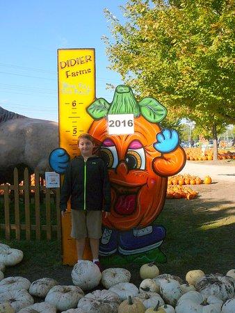Lincolnshire, IL: A staple at every pumpkin farm!