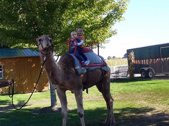 Lincolnshire, IL: the camel ride
