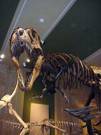 Kenosha, WI: a tyrannosaurus rex
