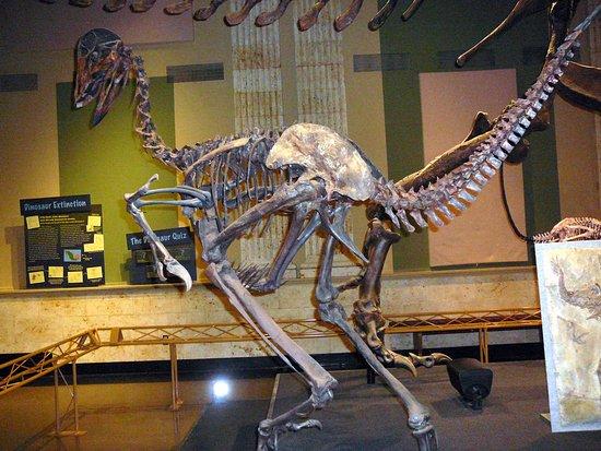 Kenosha, WI: a caudipteryx