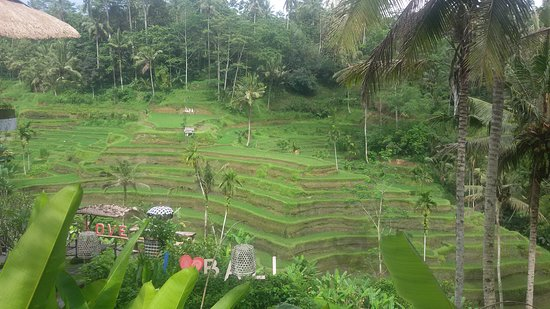 Kerobokan, Indonesia: Amazing bali inspiration tours