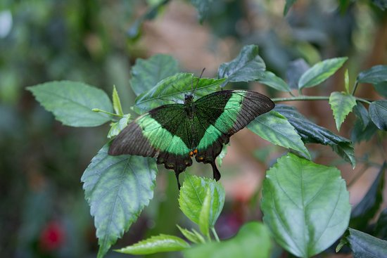 Blankenheim, Germany: Schmetterling