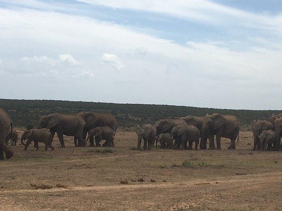 Addo Elephant National Park, África do Sul: photo5.jpg