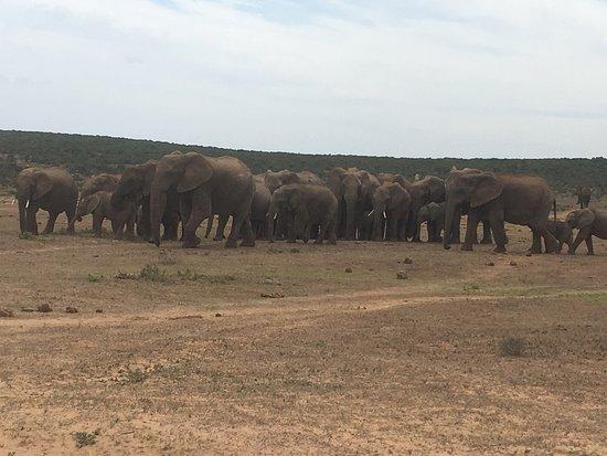 Addo Elephant National Park, África do Sul: photo6.jpg