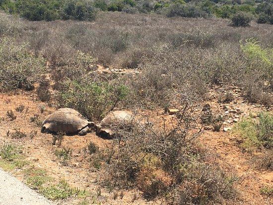 Addo Elephant National Park, África do Sul: photo7.jpg