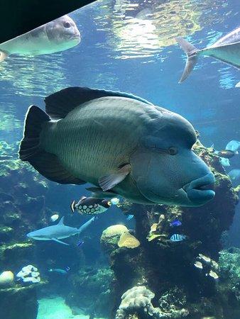 Aquarium des Lagons Nouvelle Caledonie