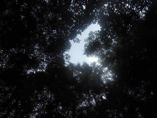 Duong Dong, Vietnam: Nằm trong hốc đá, cảm nhận làn nước suối mát, nhìn màn cây trên đầu, bạn sẽ hoàn toàn thư giãn!