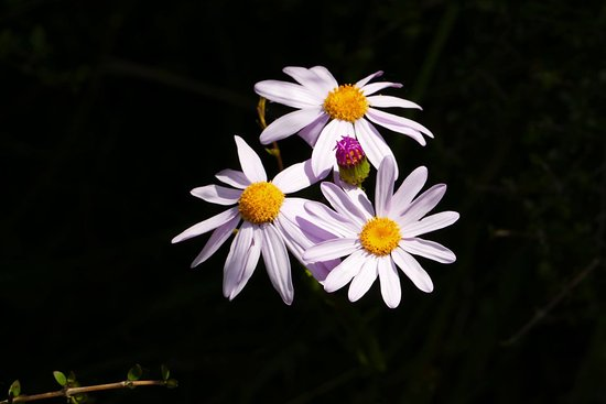 Porirua, New Zealand: Flowers @ Whitireia Park