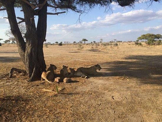Selous Game Reserve, تنزانيا: photo8.jpg