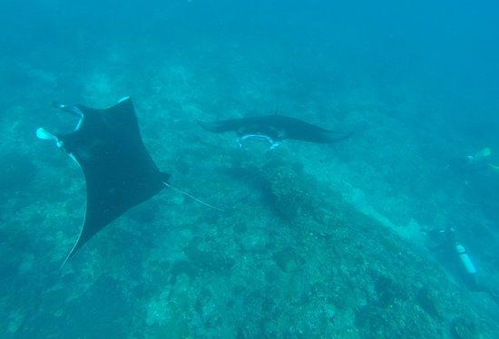Padangbai, إندونيسيا: Stretnutie s úžasným stvorením - Manta veľká
