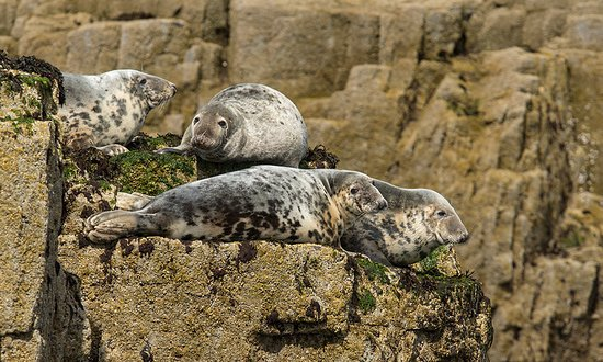 Northumberland, UK: Seals bask in the summer sun
