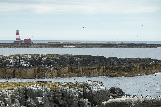 Farne Islands: A view from Staple Island