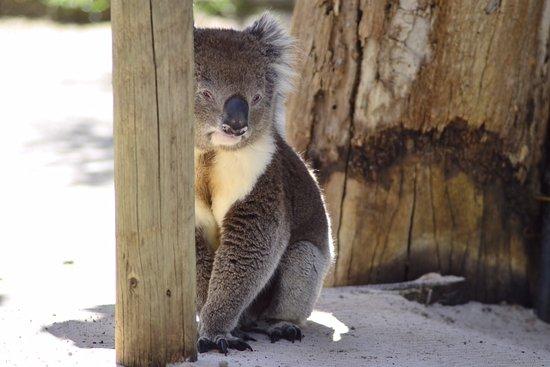 Victor Harbor, Australia: IMG_1731_large.jpg