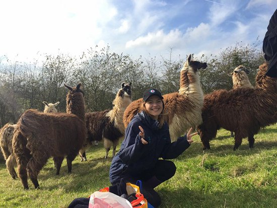Truro, UK: Me in the field full of Llamas!