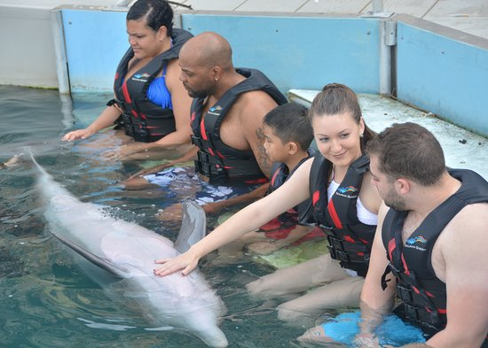 Dolphin Quest: Feeling her belly, they're skin is such a different feeling.