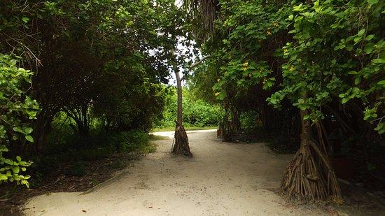 Foto de Alidhoo Island