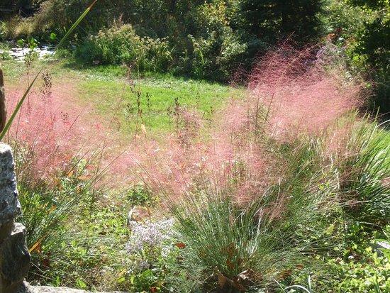 Wayne, PA: Amazing soft pink grasses