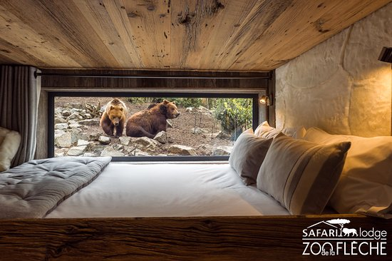 Safari lodge reviews la fleche france tripadvisor for Chambre zoo de la fleche