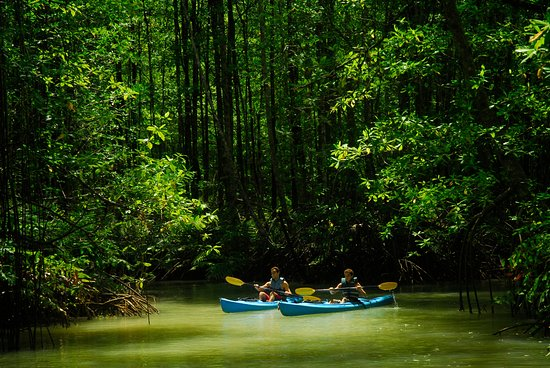 Golfito, Costa Rica: Kayas are a perfect way to explore nearby coves and mangroves.