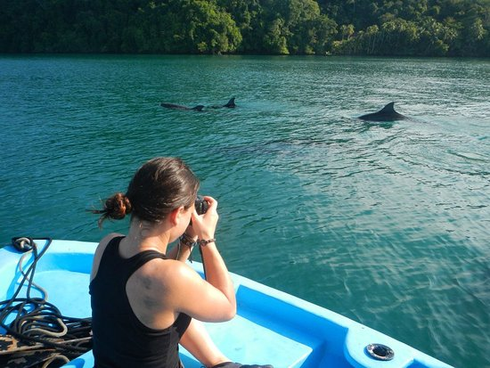 Golfito, Costa Rica: Dophins frequent our cove, and make up part of the beautiful daily sea experience.
