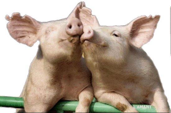 Loiu, Espanha: Nuestros cerdos se crían con mucho mimo. Eso los hace irresistiblemente sabrosos.