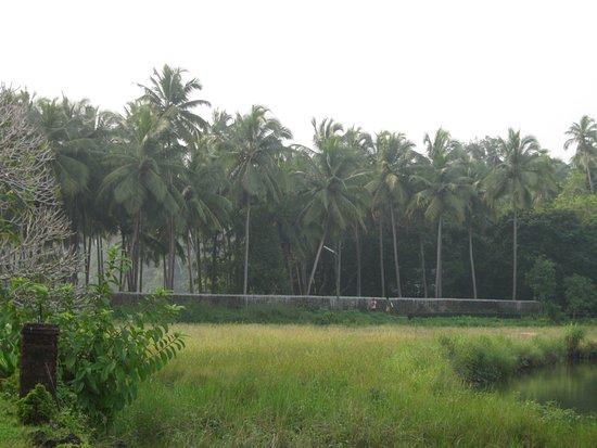 Pomburpa, India: Palm trees