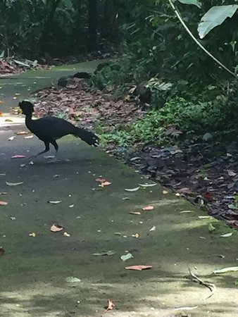 Sarapiqui, Costa Rica: Simbolo de la Selva