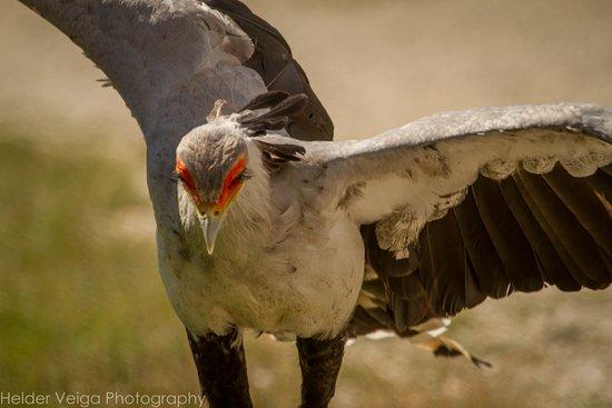 Rambouillet, France : Uma ave não muito comum