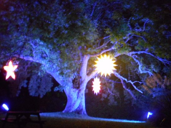 Newport, UK : stars on trees
